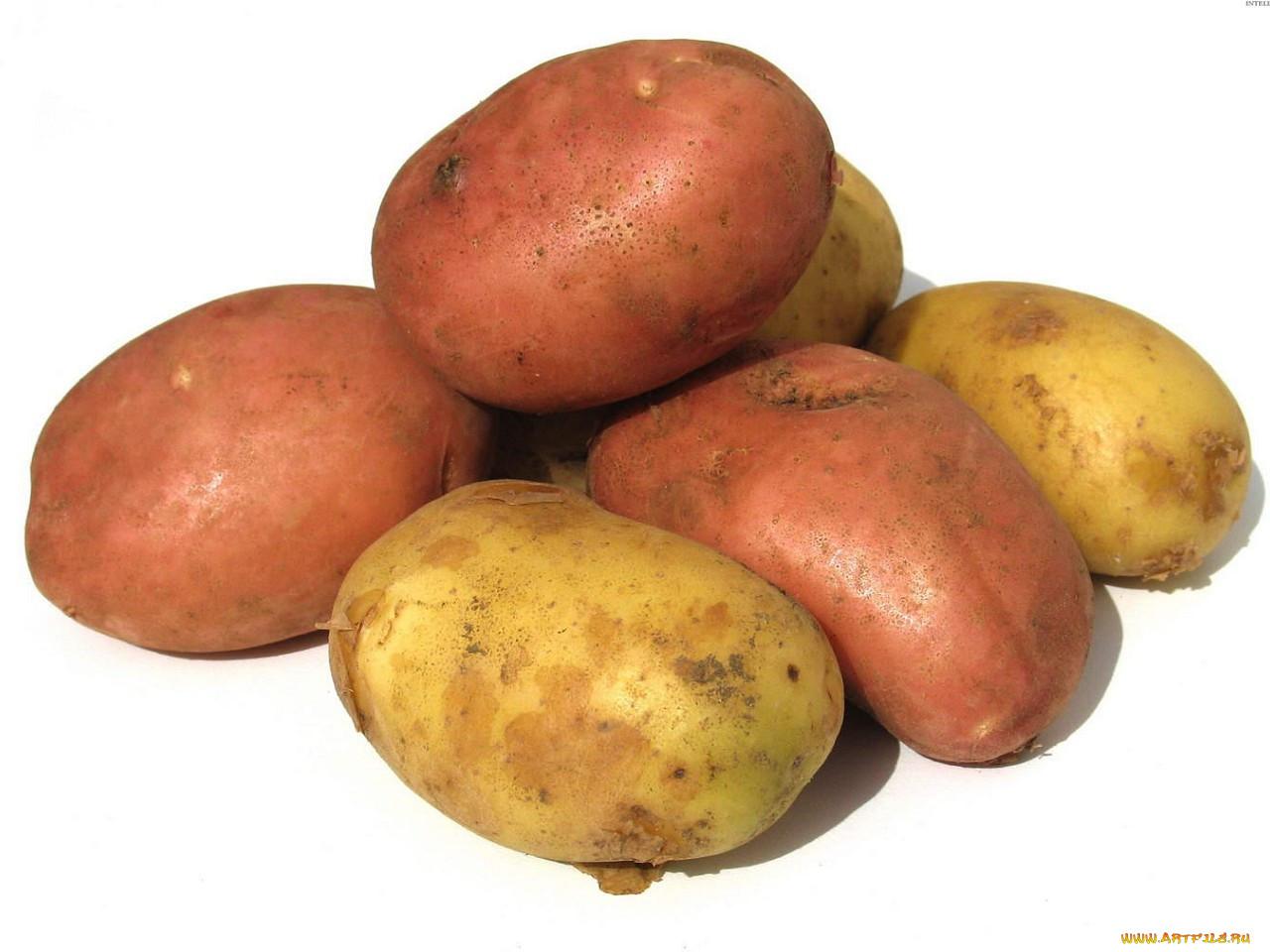 овощи картошка картинки что самое
